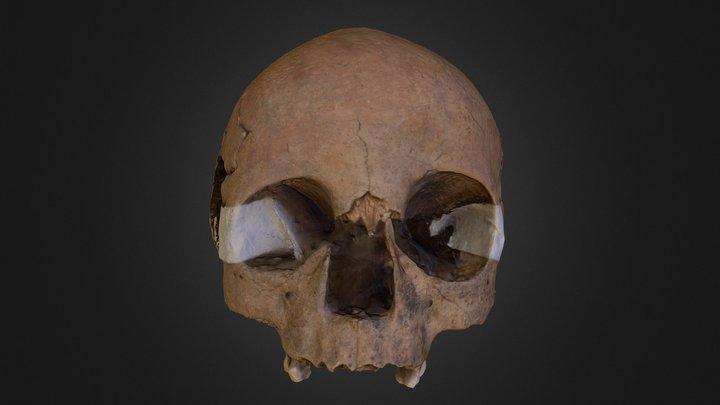 Cráneo 3D Model