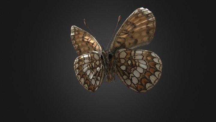 Melitaea britomartis 3D Model