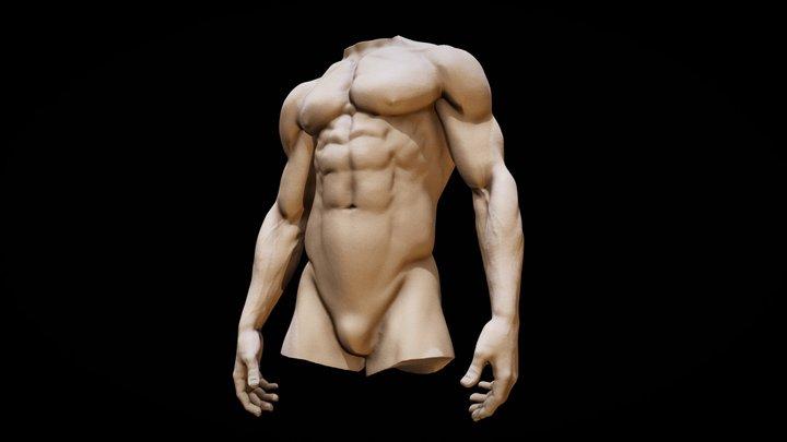 Torso anatomy basemesh 3D Model
