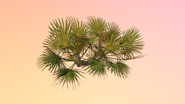 Saw palmetto (Serenoa repens) 3D Model