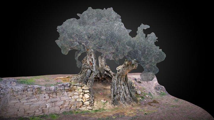 Olivo empeltre - La Portellada 3D Model