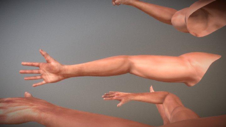 FPS- Arms 3D Model