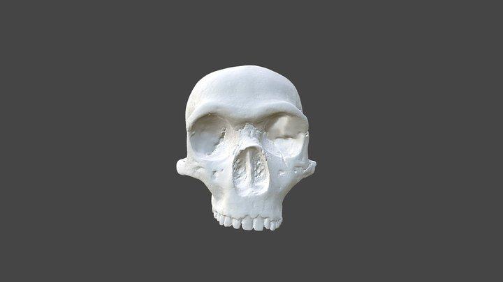 Gibraltar 1 Skull 3D Model
