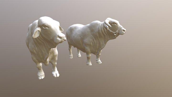Bulls- Before (horns) And After (no Horns) 3D Model