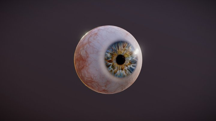 Human Eye Photorealistic 3D Model