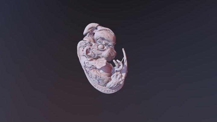 Embryo Mesh 3D Model