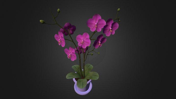 Orchids on vase 3D Model