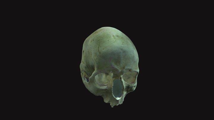 Homo sapiens 3D Model