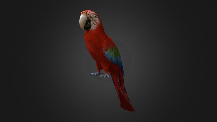 Red-and-green macaw 3D Model