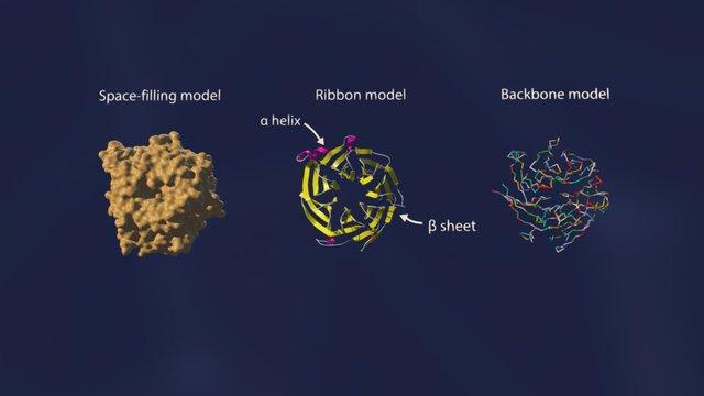 RBBP4 3D Model