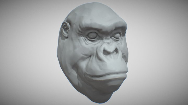 Gorilla Head 3D Model