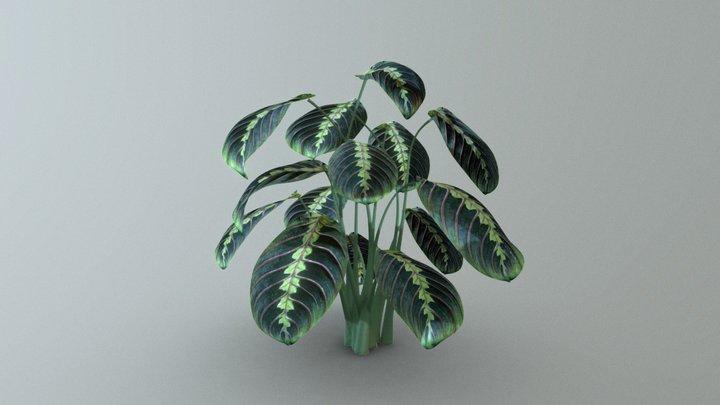 Prayer Plant 3D Model