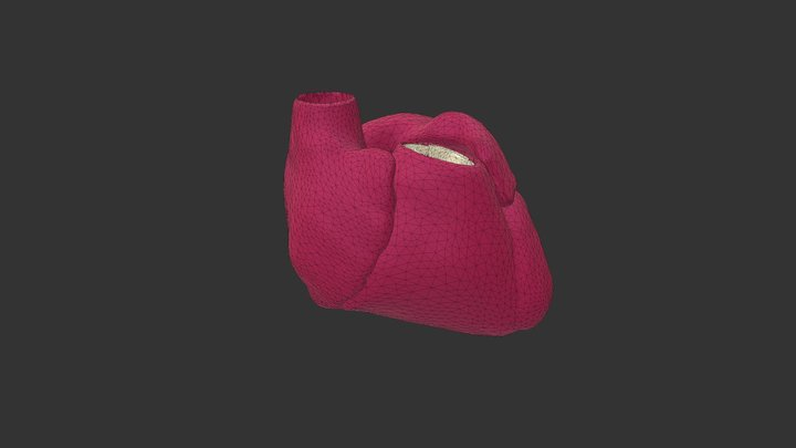 Cardiac cycle test 3D Model