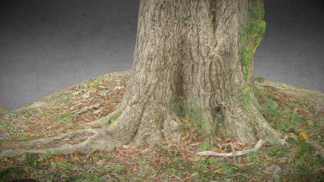 huge Tree with vein 3D Model
