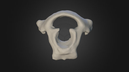 First neck vertebra (atlas) of the Dodo 3D Model