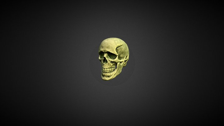 Skully 3D Model