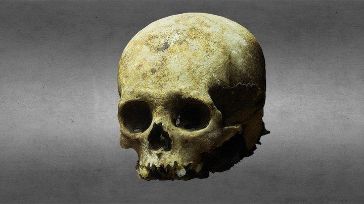 Maya Skull from a Cenote in Yucatan, Mexico 3D Model