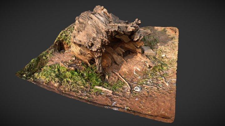 Hallow Trunk Ground 3D Model