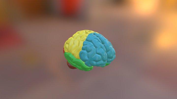 Brain Project 3D Model