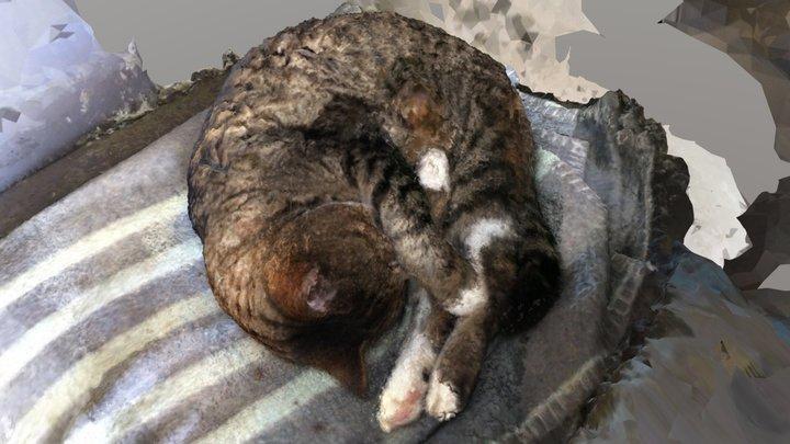 Sleepy Cat 2 - MeshRoom 3D Model