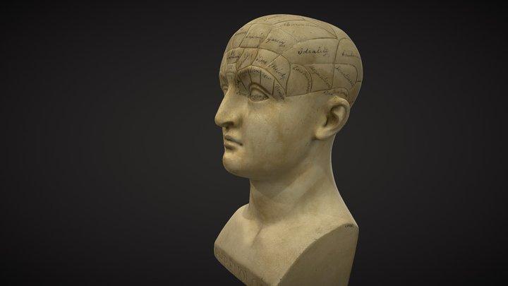 Phrenological bust - Science Museum London 3D Model