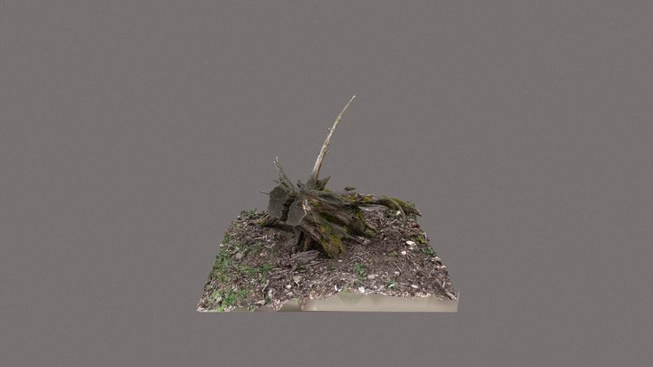 Uprooted tree stump 3D Model