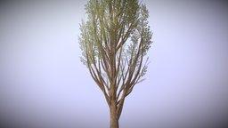Low poly tree (WIP) 3D Model