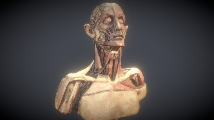 Cabinet of Curiosities Wax Bust 01 3D Model