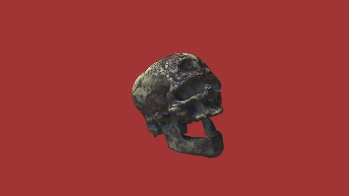 Cro-Magnon skull and jaw 3D Model