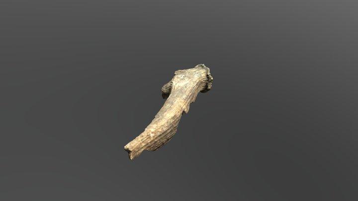 Red Deer Antler 3D Model