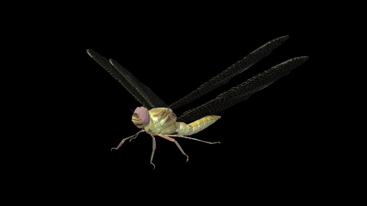 Dragon Fly 3D Model