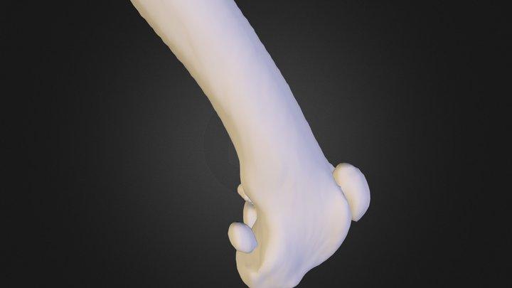 FemurPatellaC 3D Model