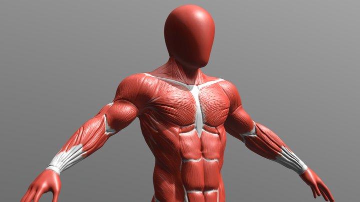 2284_HUIJNEN_Nicolas-Humain_Ecorche_Anatomie 3D Model