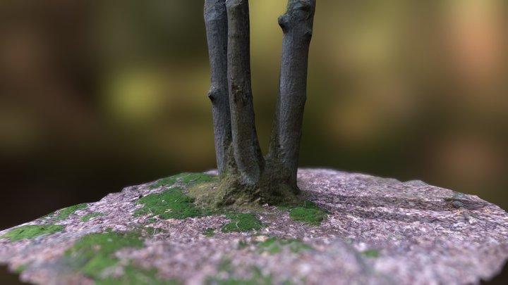 Triple tree trunk 3D Model