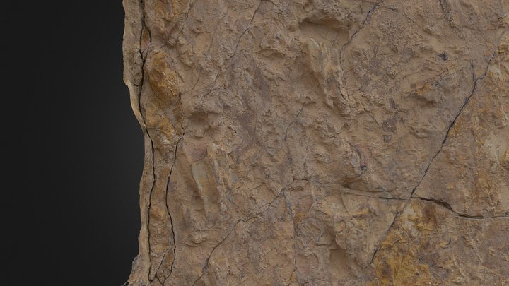 Zoomed: well-preserved Cretaceous Croc Trackway 3D Model