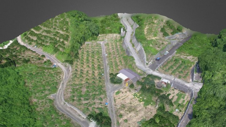 Local Orange Field 3D Model