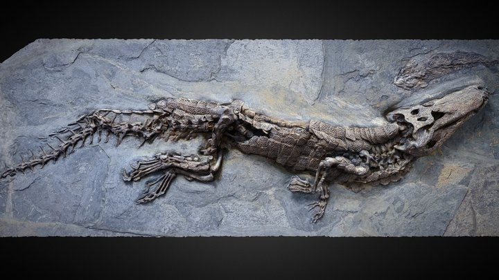 Fossil crocodile from Messel PBR 3D Model