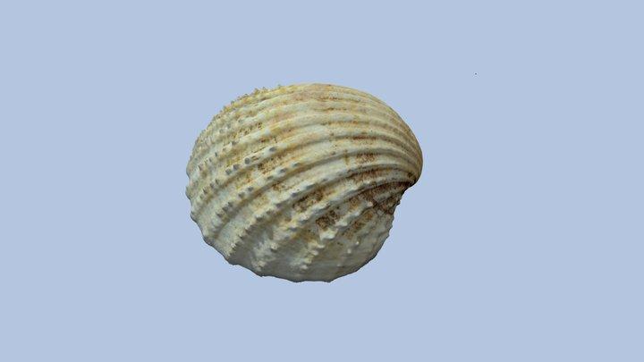 Sea Shell #2 3D Model
