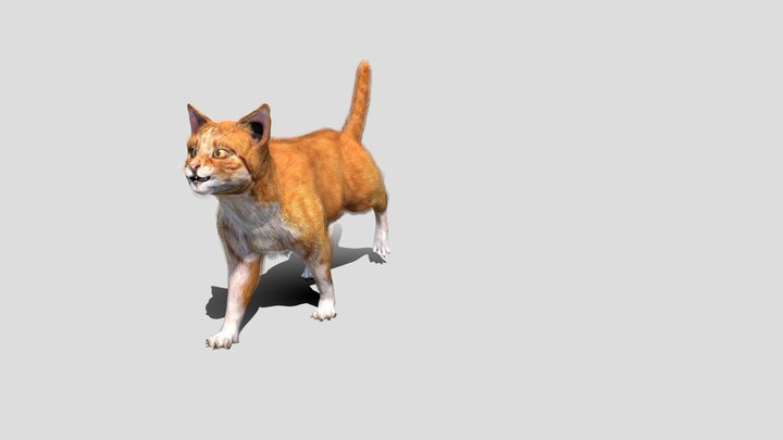 Furry cat with animations 3D Model