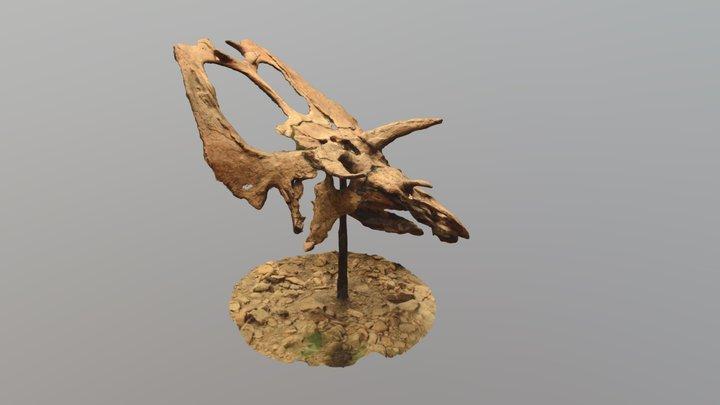 Pentaceratops Skull 3D Model