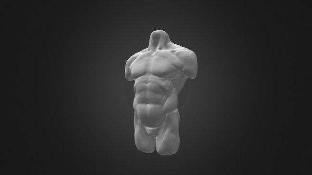 06 Torso 3D Model