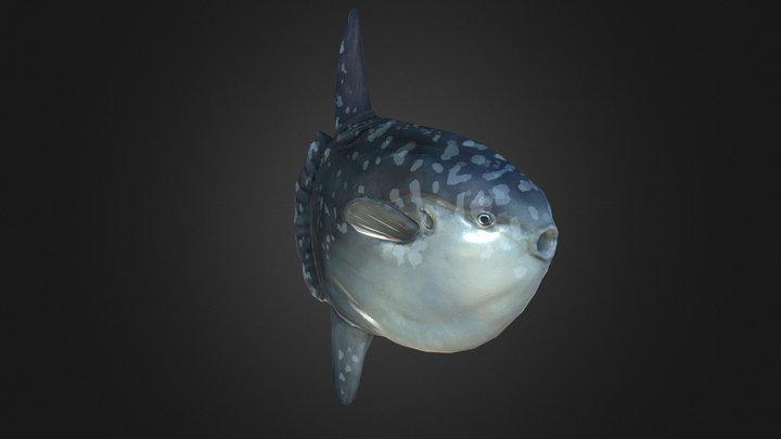 mola mola 3D Model