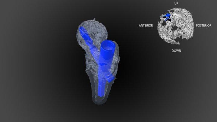 ARRIBA 3D Model