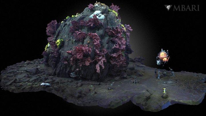 D1263 Return to Sur Ridge Coral Rock 3D Model