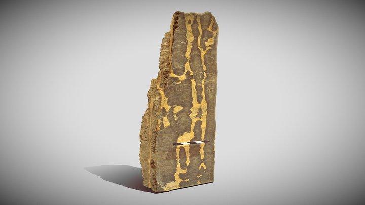 Bitter Springs stromatolite (columnar form) 3D Model