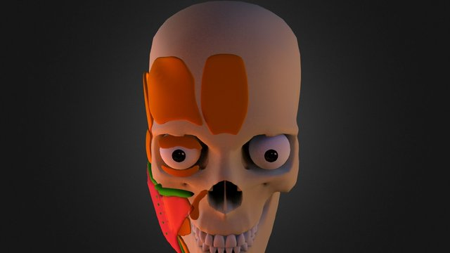 CONG FACELIFT ANATOMY_Young 3D Model
