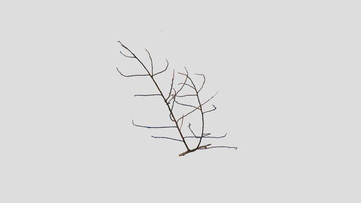 Branch Scan from Nova Xavantina, Brazil 3D Model