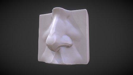 Anatomy Study - Nose 3D Model