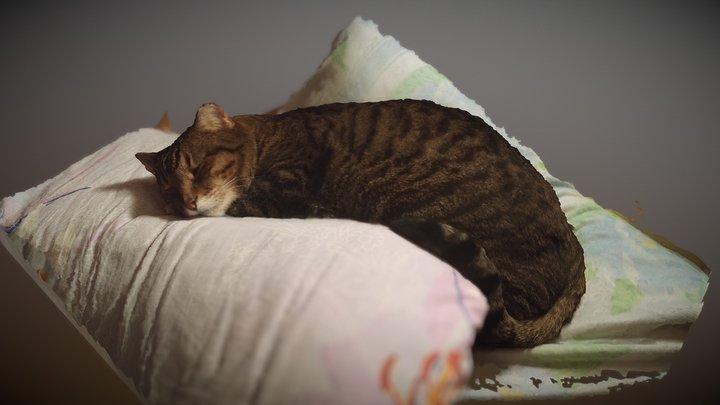 Cat (Take 2) 3D Model