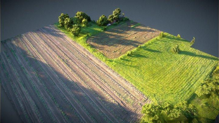 Field and Garden 3D Model